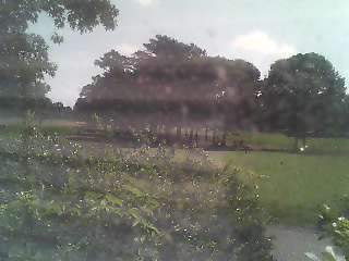 Live Webcam view of the Captains Golf Course